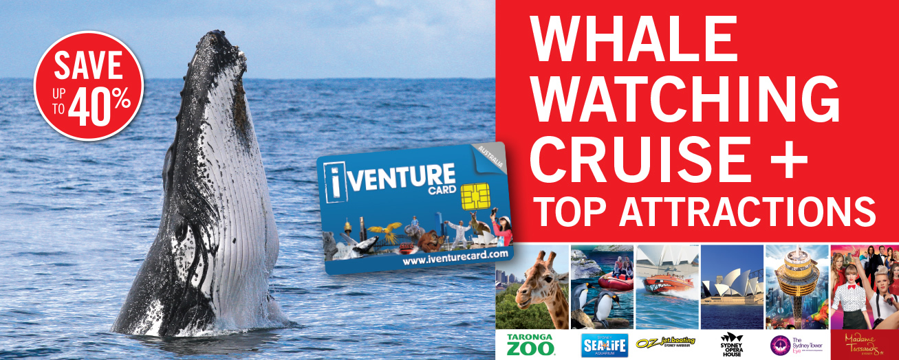 Whale Watching Cruise + Top Attractions